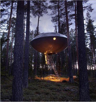 Гостиница на дереве