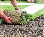 Учимся выбирать рулонный газон для дачного участка
