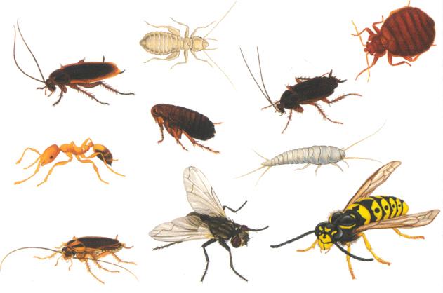 Как избавится от насекомых в доме